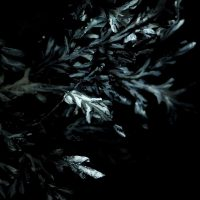 pinos-nocturnos042